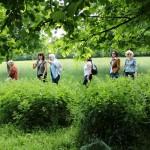 Ankerwyke walk