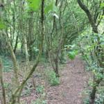 Willowfields 2