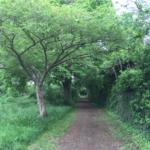 Willowfields path