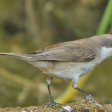 Willowfields Bird Survey reveals 25 different species