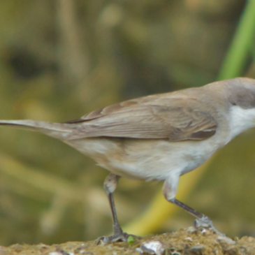 Willowfields Bird Survey reveals 25 different species